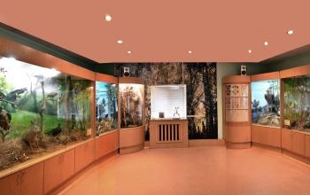 Лаборатория екології лісу